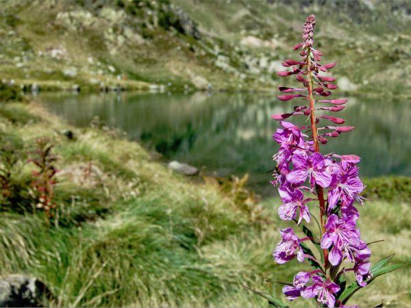 lagos-andorra-excursiones