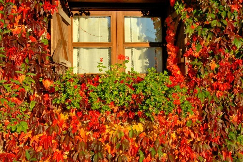 Photos of Hotel Selba D'Ansils in BENASQUE, SPAIN (3)